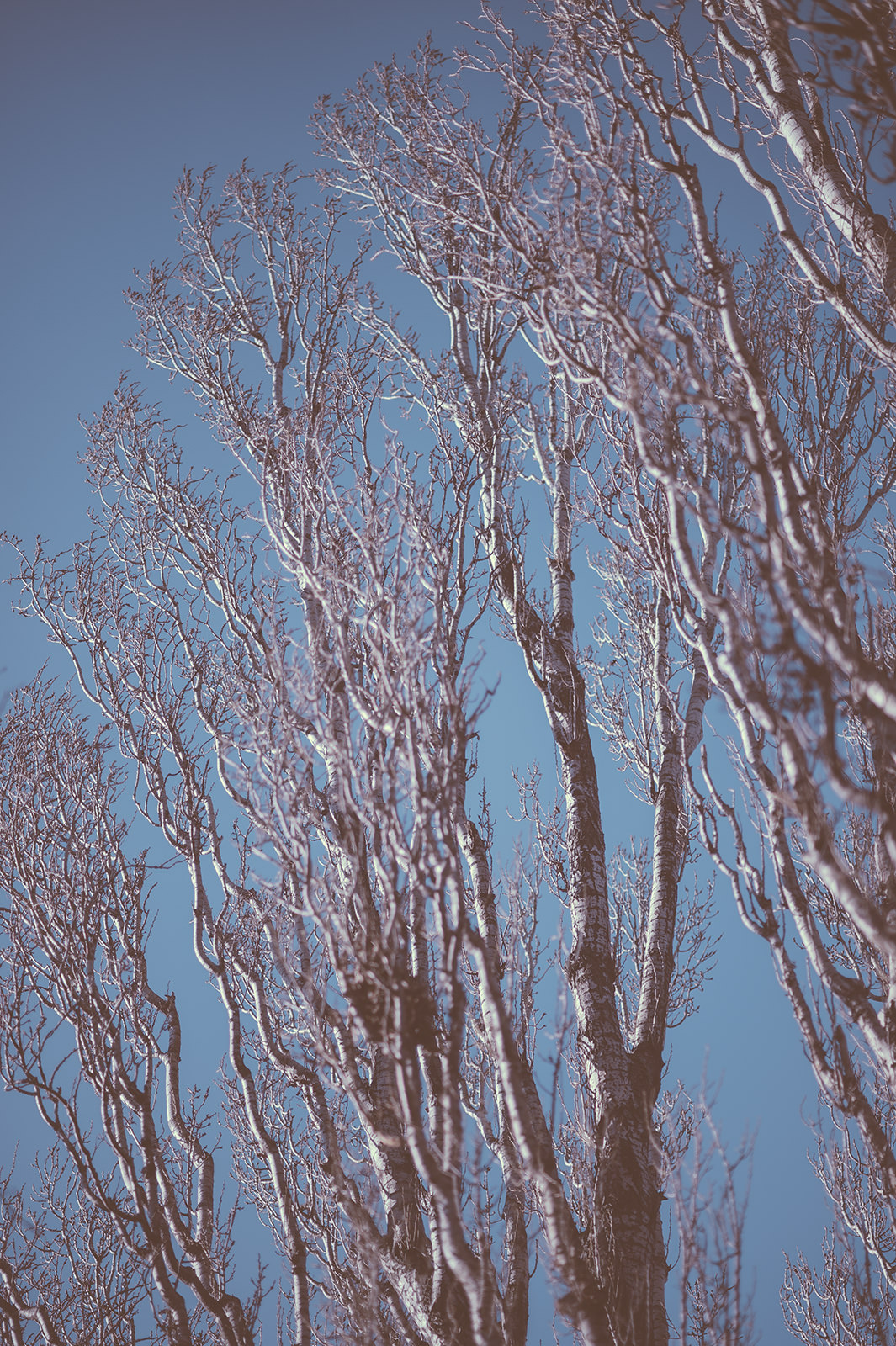Branches_2
